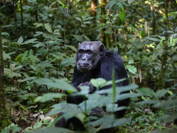 Rwanda primates & Mafia Island tailor made holiday