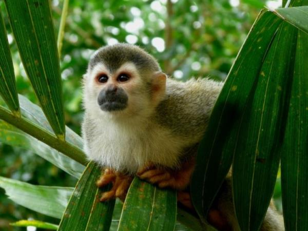Costa Rica tailor made vacations, Rainforest adventure