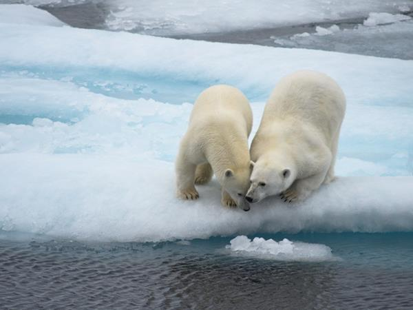 Spitsbergen luxury cruises