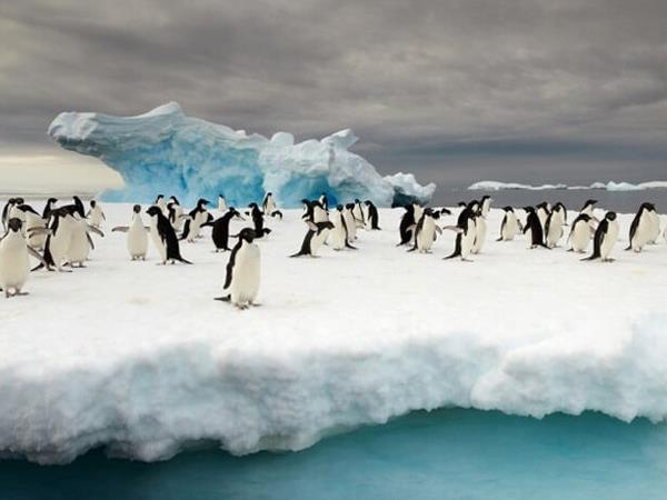 Ross Sea Antarctic Islands cruise from New Zealand