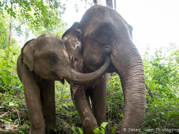 Elephant conservation and hill tribe volunteering in Thailand