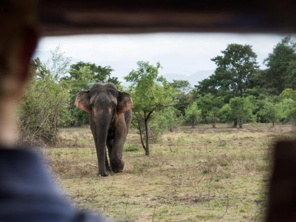 Elephant & wildlife conservation volunteering in Sri Lanka