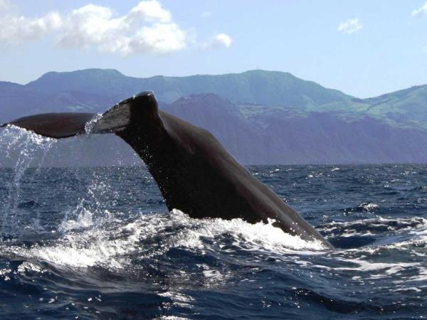 Azores whale watching tour