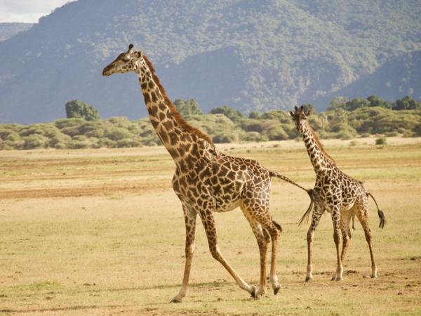 Serengeti, Selous and Zanzibar small group vacation