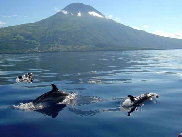 Yacht charter in the Azores, families