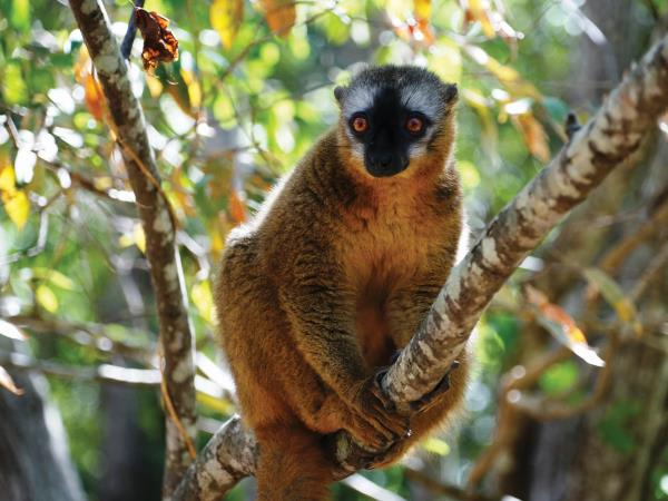 Madagascar wildlife small group tour