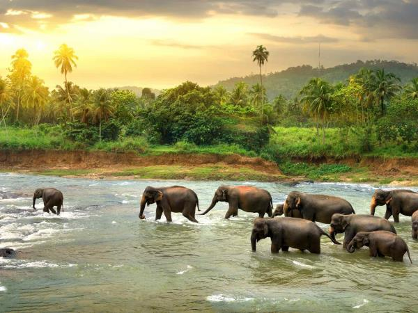 Sri lanka luxury family tour