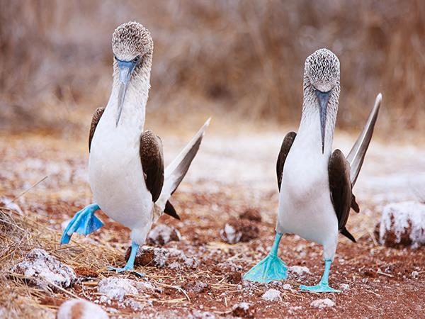 Galapagos and Peru tour