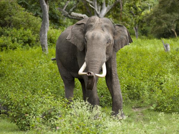 Sri Lanka luxury wildlife vacation