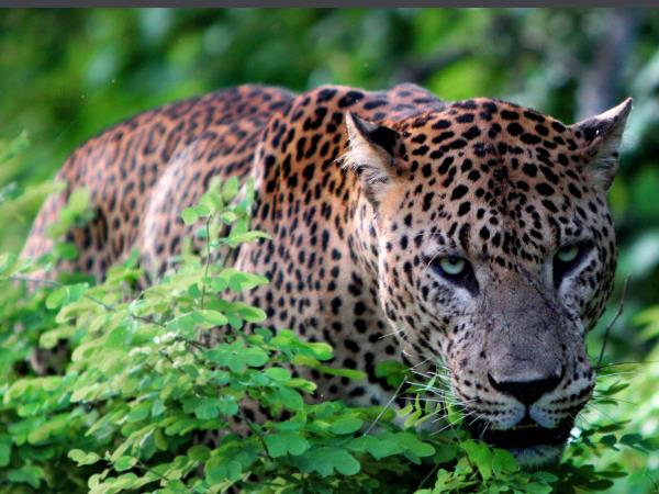Sri Lanka luxury cultural & wildlife tour