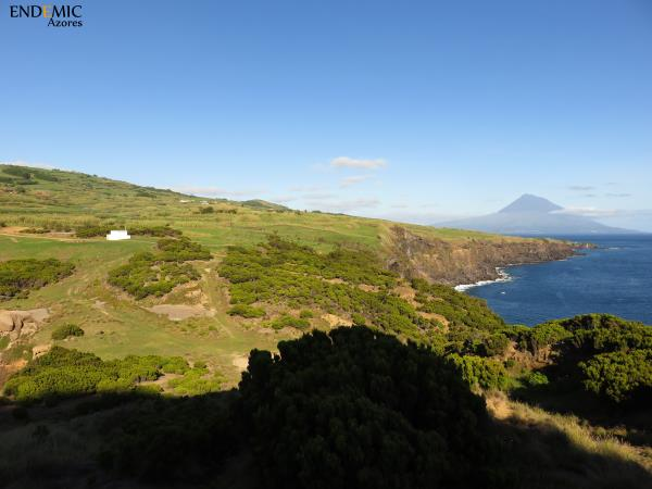 Azores holiday, Faial and Pico