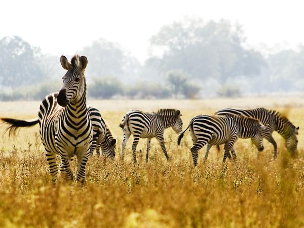 Zambia safari and Victoria Falls holiday