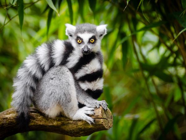 Off the beaten track vacation to Madagascar