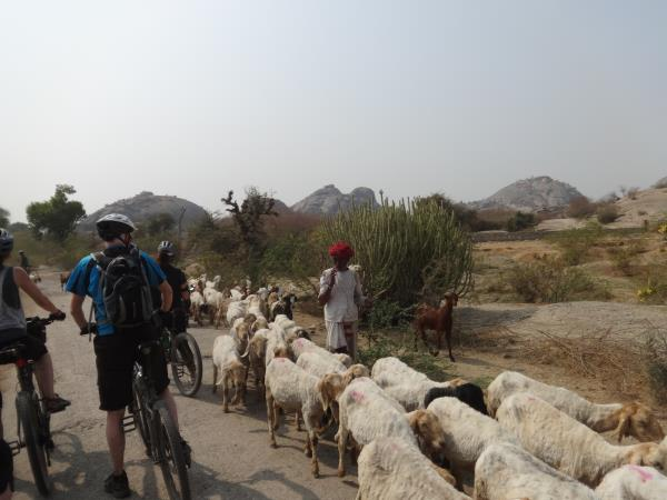 Rajasthan cycling tours in India