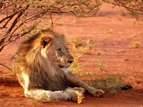 Madikwe reserve safaris in South Africa