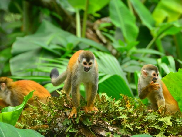Costa Rica Wildlife tour, small group