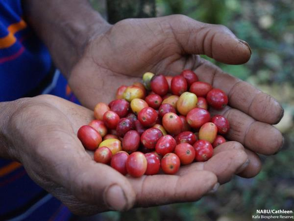 Ethiopia coffee tour