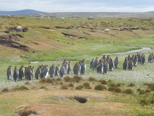 Falkland Islands discovery vacation