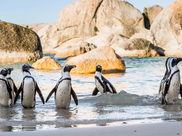 South Africa family vacation, Cape Town and safari