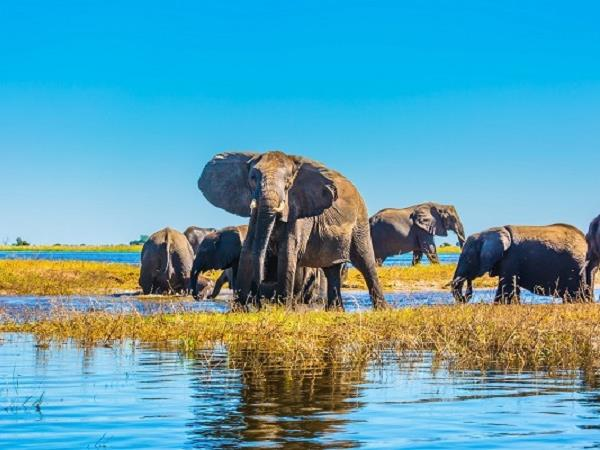 Botswana luxury family safari