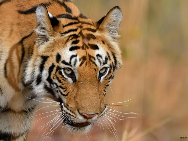 Tiger and wildlife photography tour, India