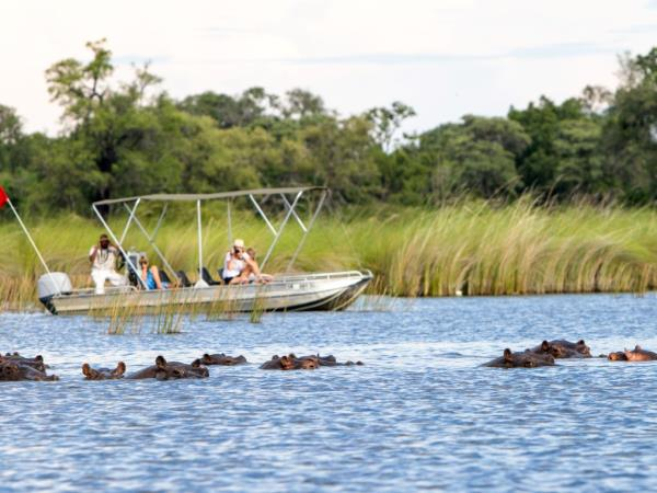 Vegan New Year safari in Botswana