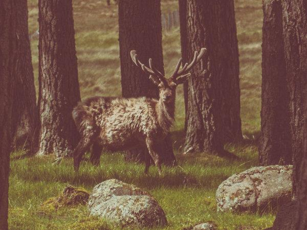 The Cairngorms wildlife holiday in Scotland