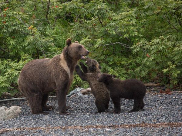 Kamchatka and Chukotka wildlife cruises, Russia