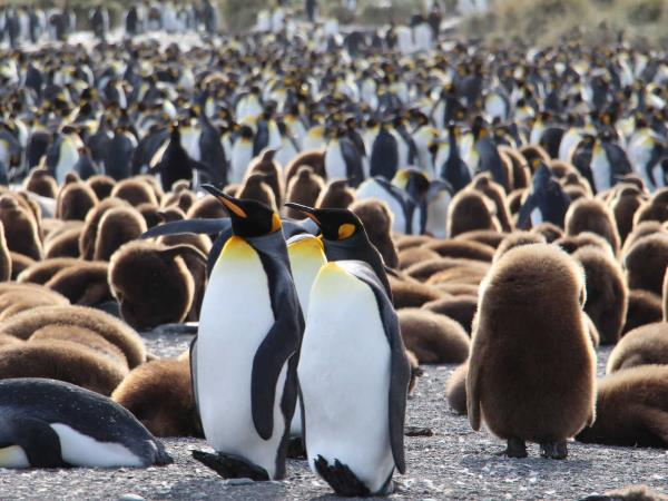 Antarctica, Falklands & South Georgia wildlife cruise
