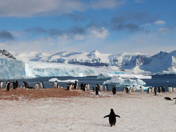 Total Antarctic highlights cruise, epic Antarctica