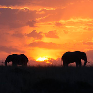 Best time to visit the Masai Mara