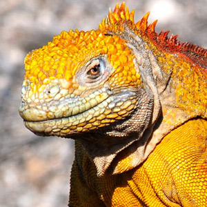 Top 10 Galapagos wildlife species