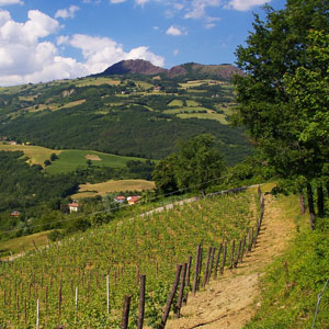 Walking in the Prosecco Hills