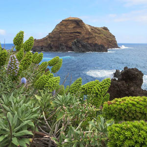 Things to see & do in Madeira
