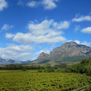 Wine tasting holidays in South Africa