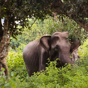Holidays to Yala National Park, Sri Lanka
