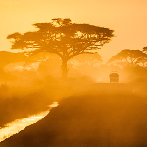 Safaris in Kenya