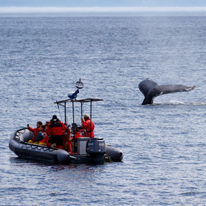 Whale watching in the Arctic