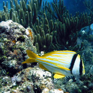 Scuba diving holiday in Cuba