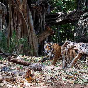 India wildlife holidays guide