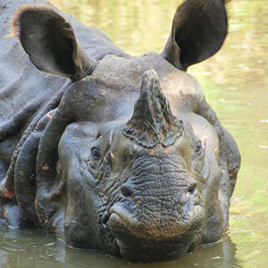 Chitwan National Park travel guide
