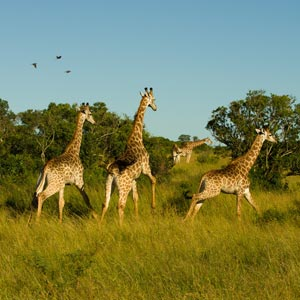 Things to see & do in Hluhluwe-Imfolozi Park