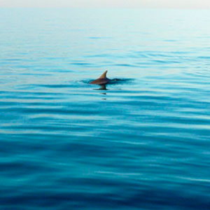 Dolphin watching travel guide