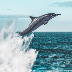 Best time for dolphin watching holidays