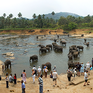 Why we dont support Pinnawala Elephant Orphanage