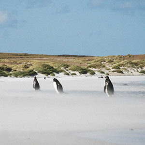 Things to do in the Falkland Islands