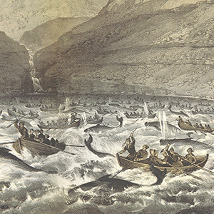 Whaling in the Faroe Islands