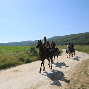 Horse riding holidays in Tuscany