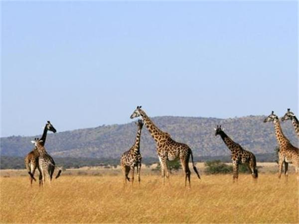 Family safari in Tanzania
