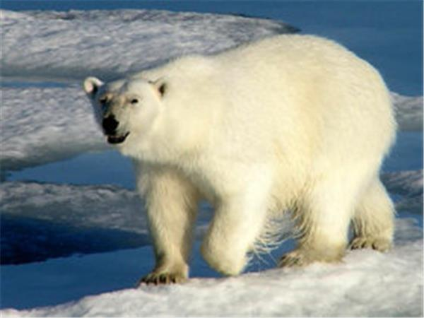 Spitsbergen wildlife cruises